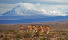 Chile's best national parks